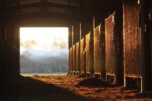 at çiftliği 2