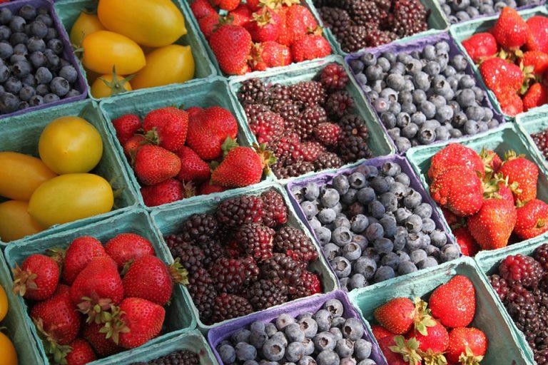 organik tarım2
